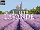 culture_lavande_mp13