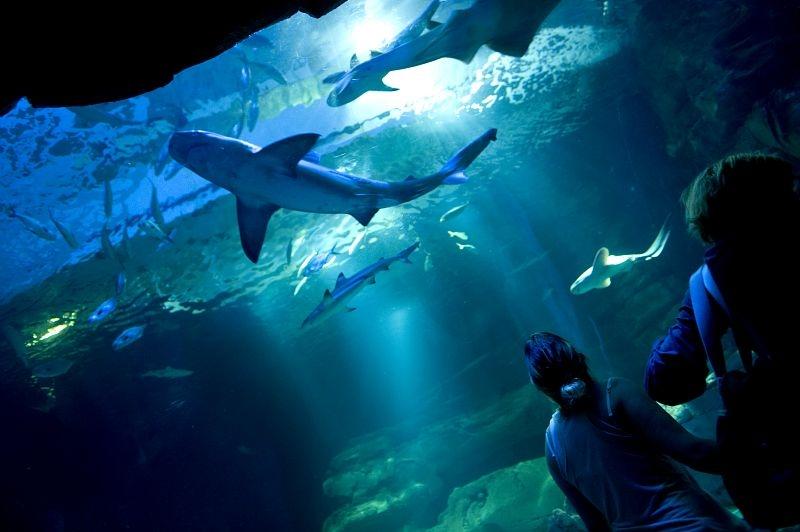 acuario-de-paris-cineaqua