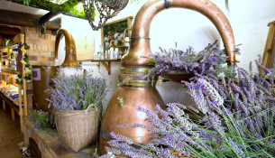 Distilleria-lavanda