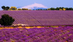 Mont Ventoux & lavanda