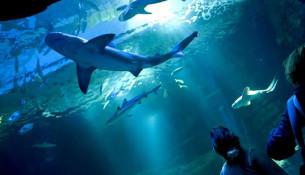 foto aquarium banner