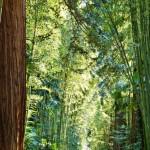 La Bambouseraie 2014 - All+®e des S+®quoias