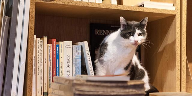 Bécherel_libreria Le Donjon